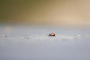 18th Feb 2020 - Lady bug