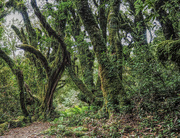 19th Feb 2020 - goblin forest