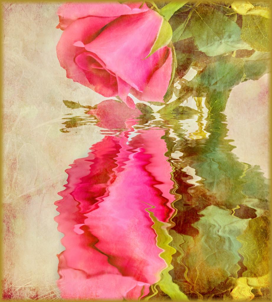 My valentine's rose by ludwigsdiana