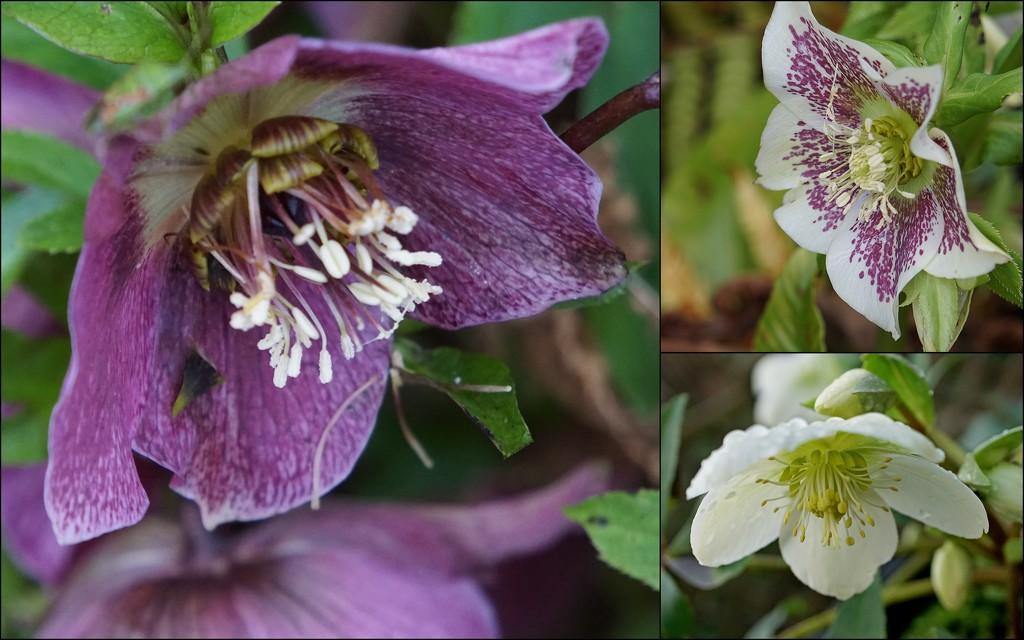 a walk round the garden by quietpurplehaze