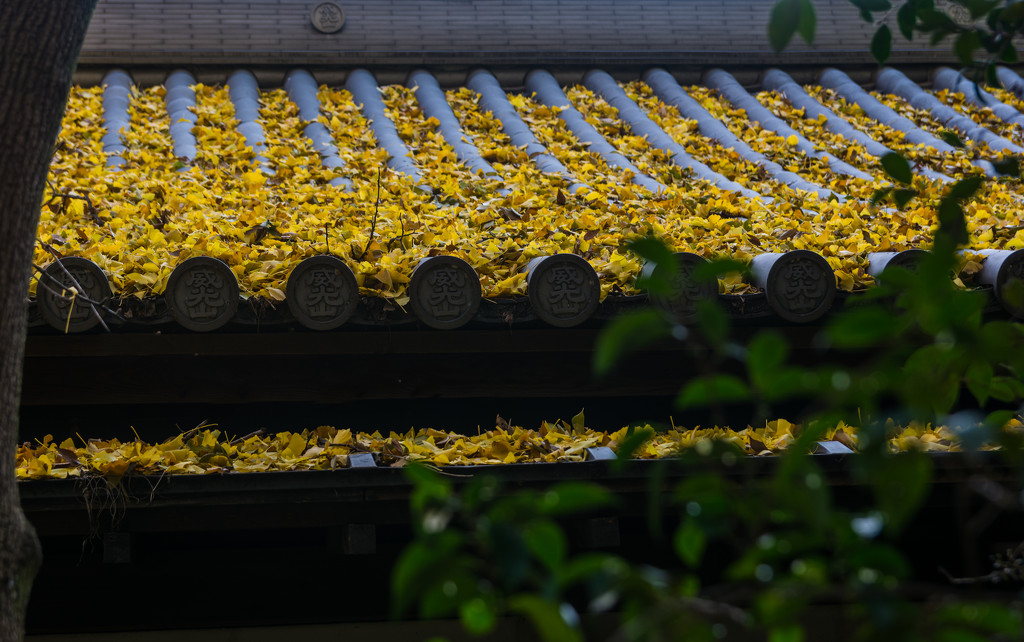 Roof & ginko leaves by tokyobogue