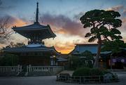 17th Dec 2019 - Gokokuji at sunset