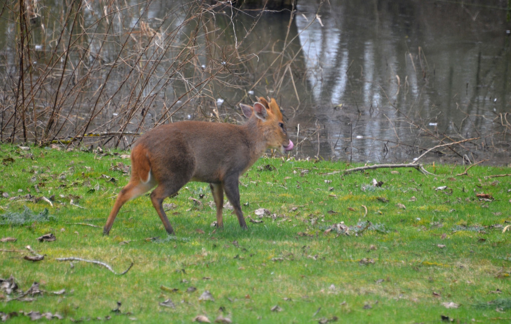 Running Deer by arkensiel