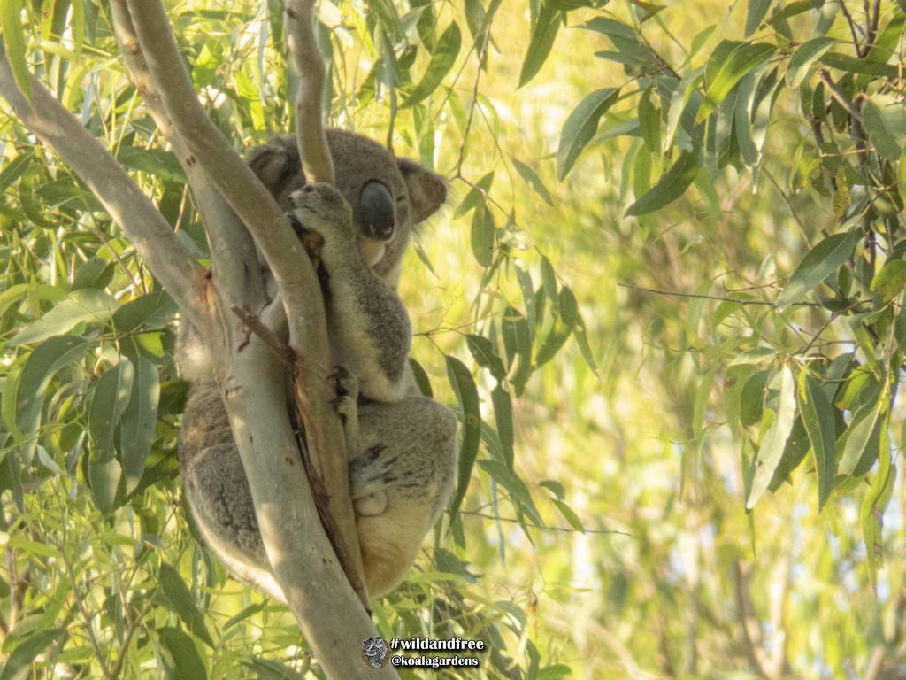 golden morning colours by koalagardens