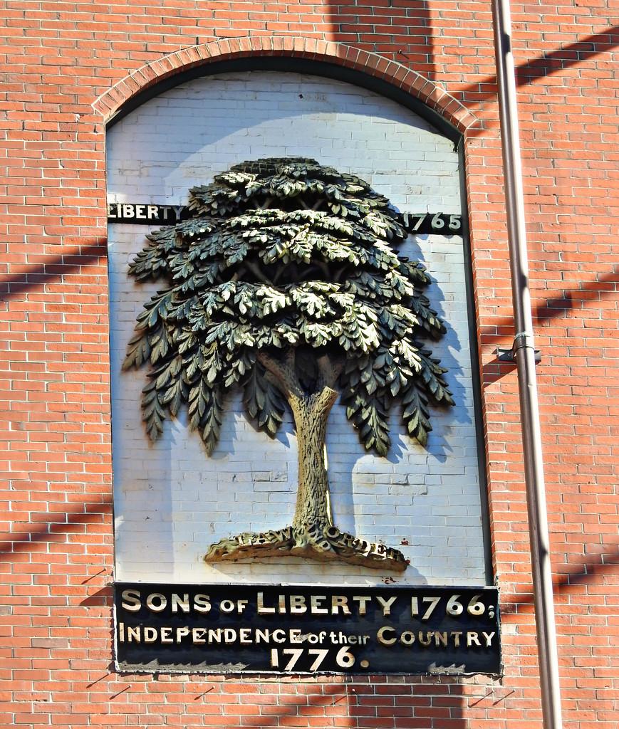 Liberty Tree by ddw