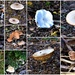 Mushrooms Everywhere ~