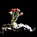 British soldier lichen by novab