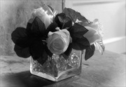19th Feb 2020 - Roses in a Glass Vase in the Afternoon Sun
