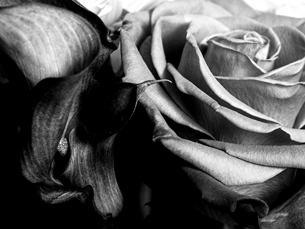 Calla Lilly and Rose by tosee