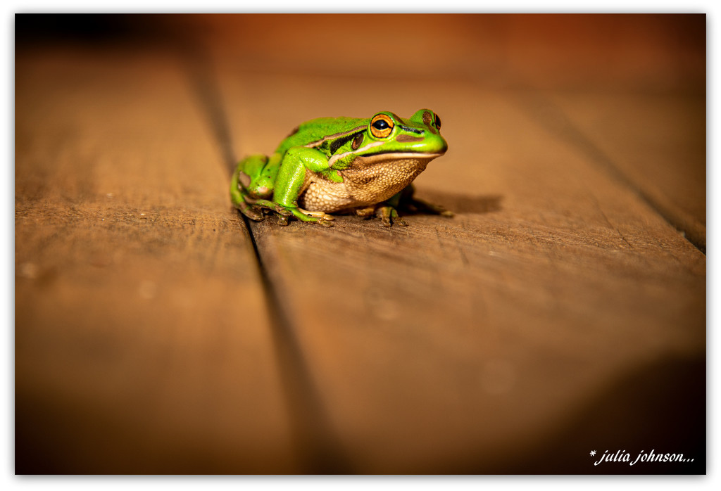Freddy Frog... by julzmaioro