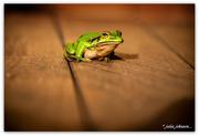 20th Feb 2020 - Freddy Frog...