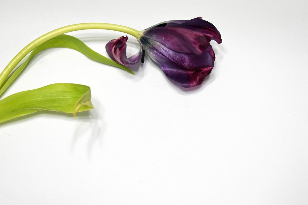 Purple Beauty by homeschoolmom