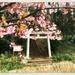 2020-02-20 Blooming Torii
