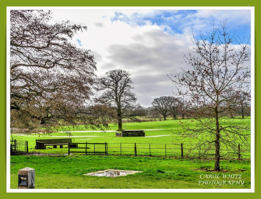 Delapre Abbey Parkland by carolmw