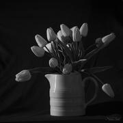 19th Feb 2020 - Tulips