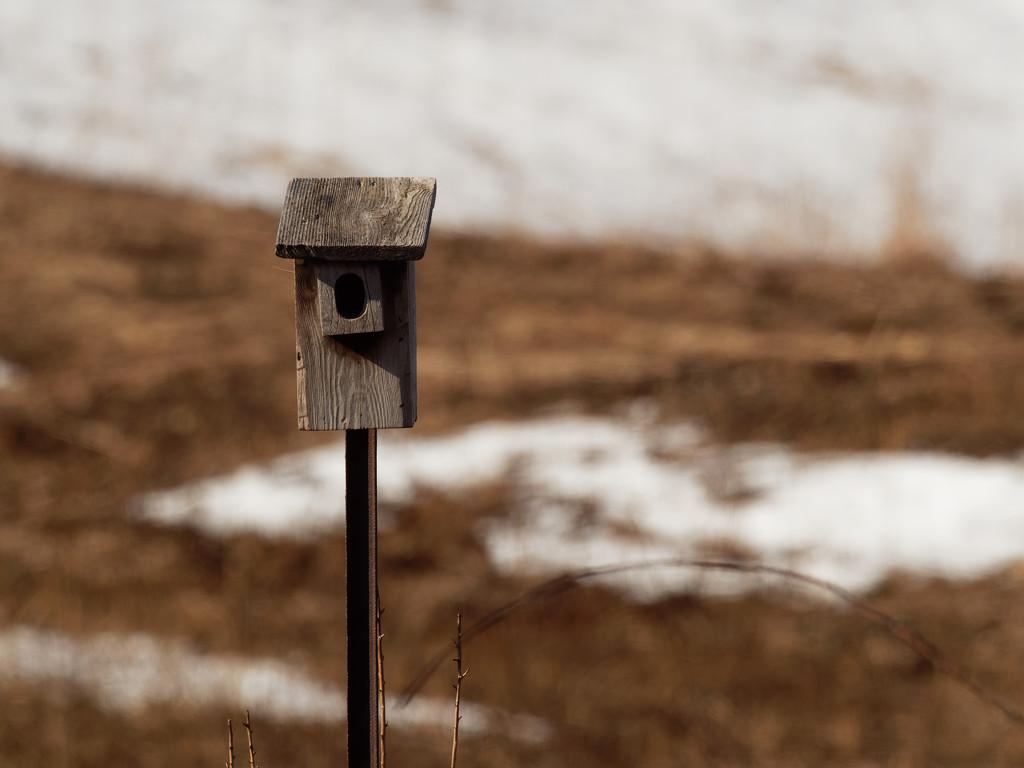 birdbox by rminer