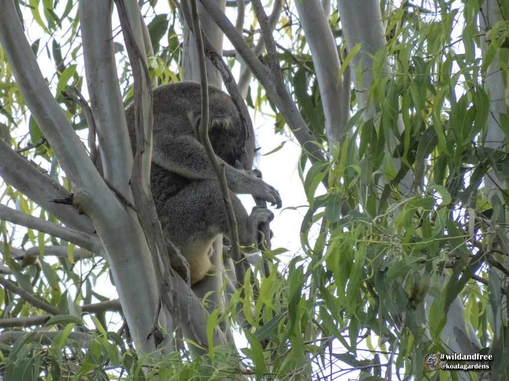 head rest by koalagardens