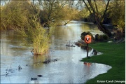 20th Feb 2020 - River Great Ouse