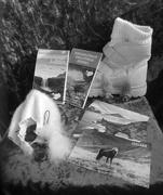 20th Feb 2020 - iceland still life