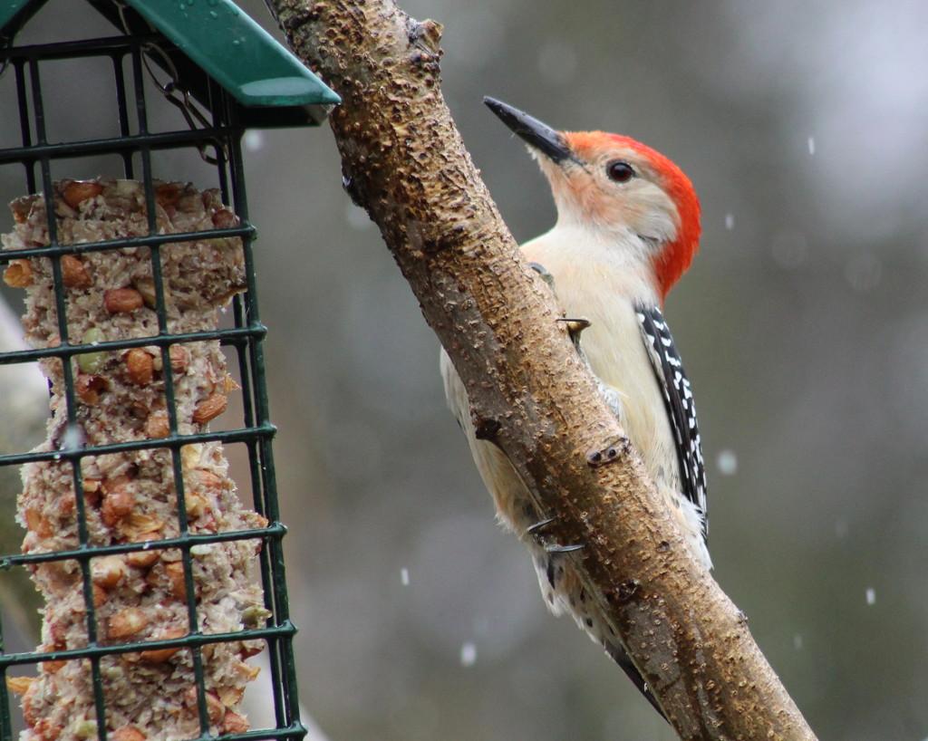 Rain, Sleet, Or Snow by cjwhite