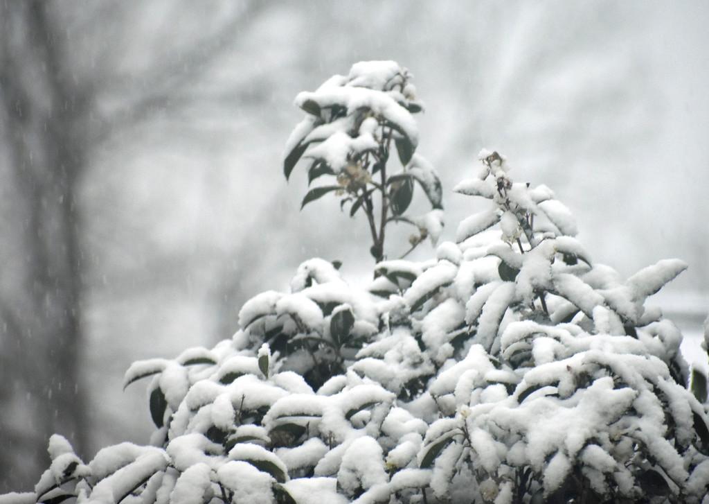 Snow tree by homeschoolmom