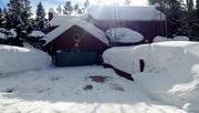 20th Feb 2020 - More Snow
