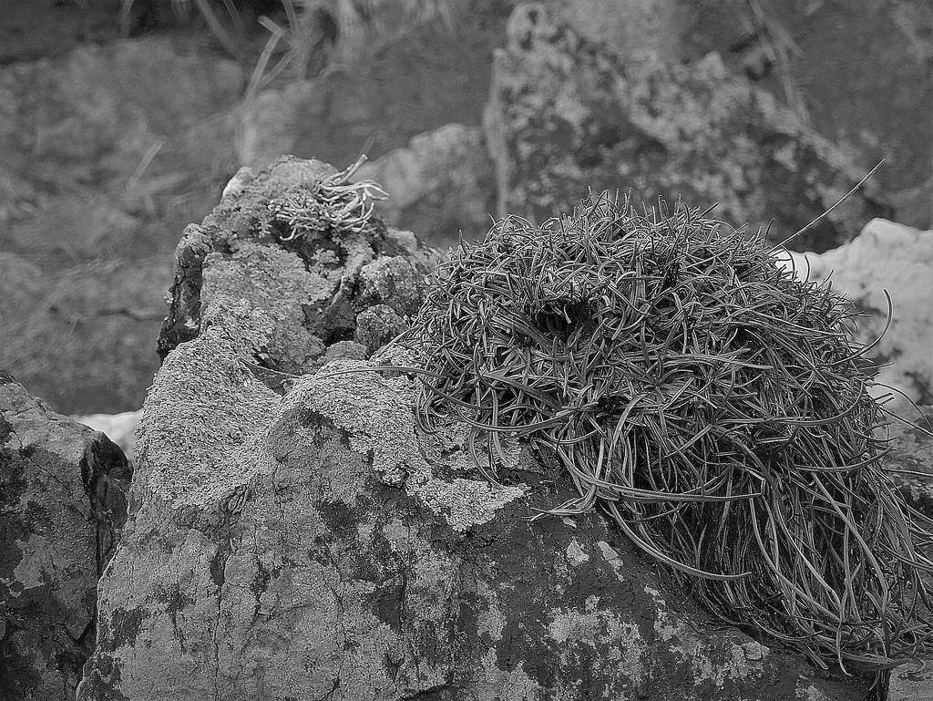 Rock still life (1) by etienne