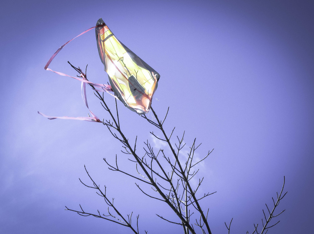 Kite eating tree by mittens