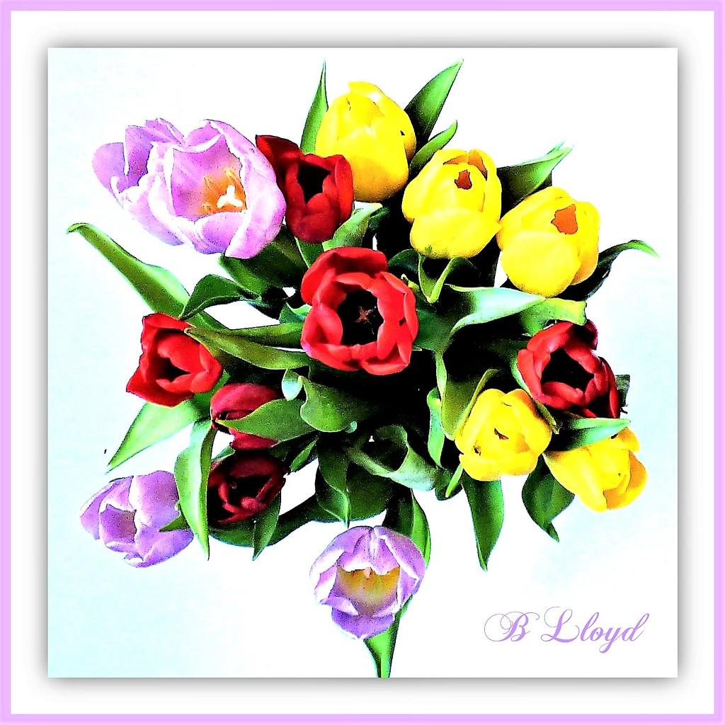Tulip Bouquet  by beryl