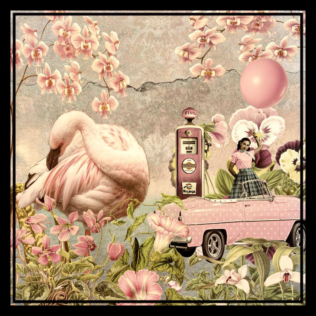 Happy Flamingo Friday! by joysfocus
