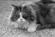 21st Feb 2020 - Pretty Kitty