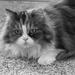 Pretty Kitty by bjywamer