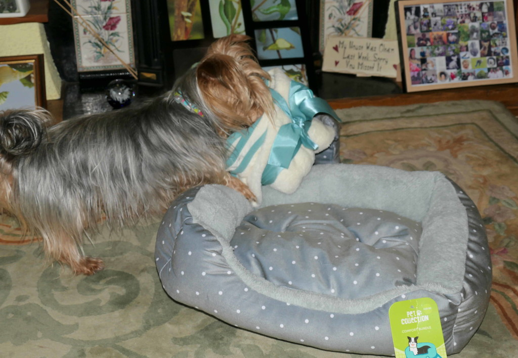 Tilly's new bed set by jesika2
