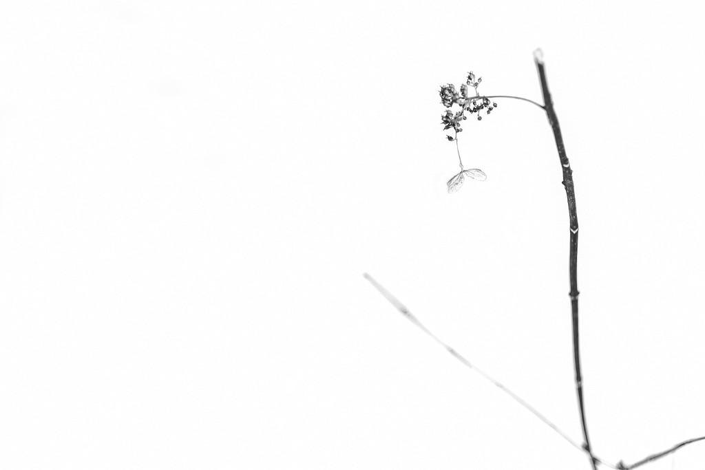 Winter Flower by tosee