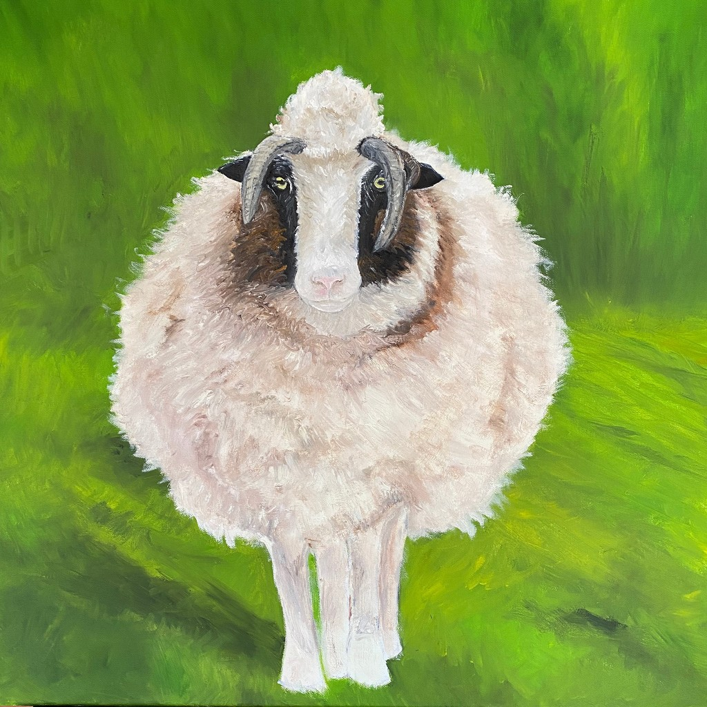 Cream, a sheep from Doolin, Ireland by berelaxed