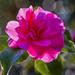 Pretty in Pink by kvphoto