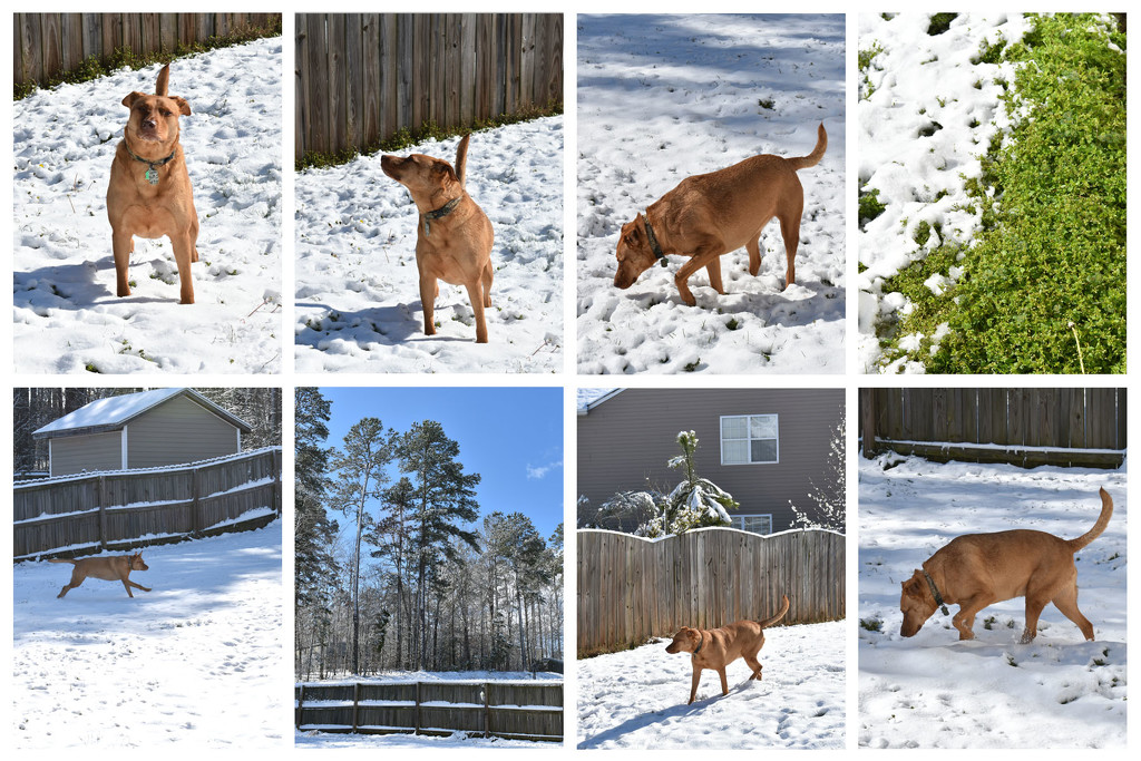 Snow dog by homeschoolmom