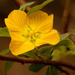 Yellow Flower!