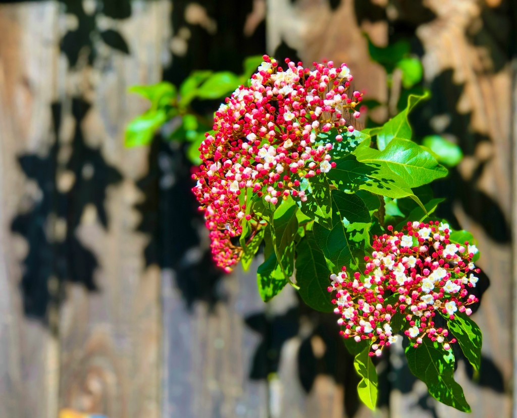 Where Flowers Bloom by gardenfolk