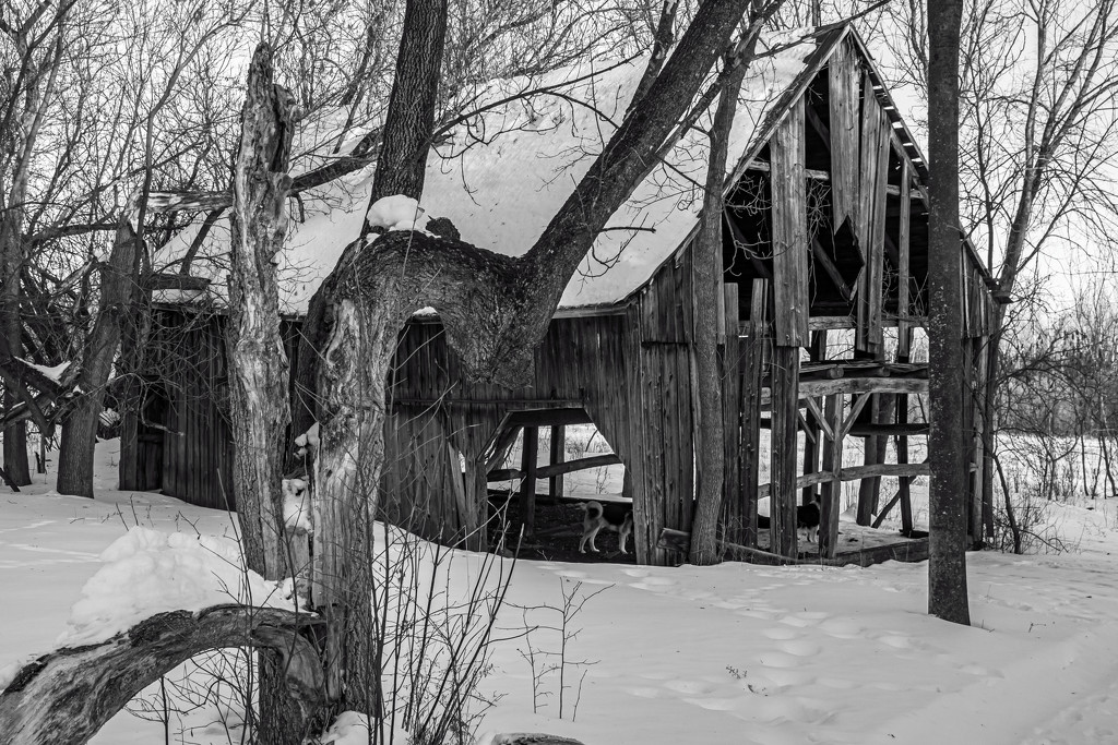 Driveshed in Black and White by farmreporter