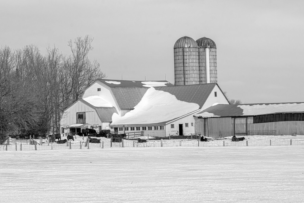 White Barn in the Winter by farmreporter