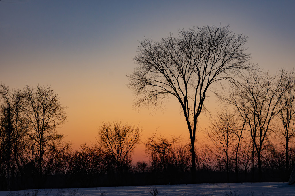 February Words - Silhouette by farmreporter