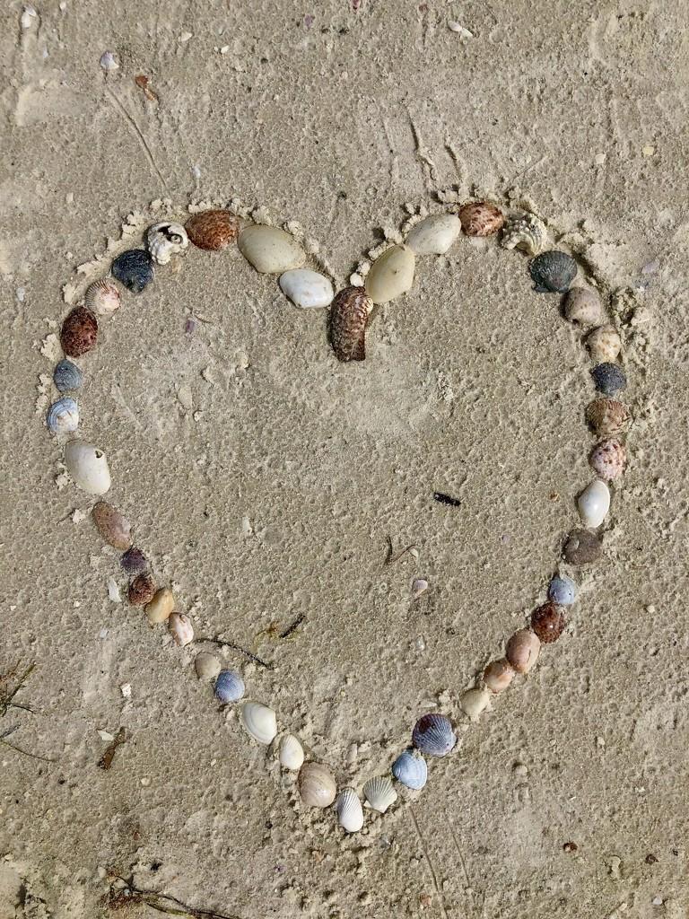 Shell Valentine  by loweygrace