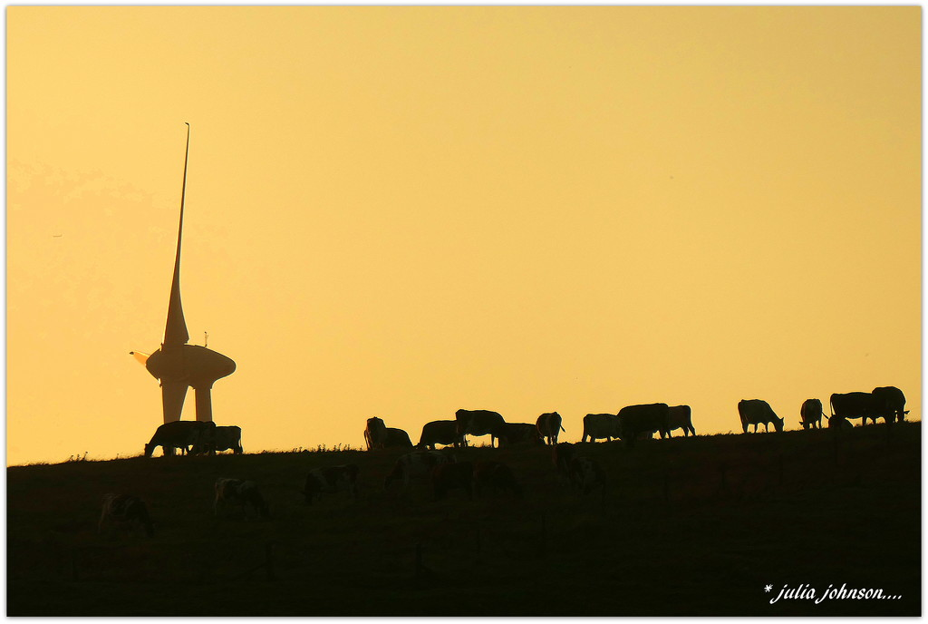 Cows and the Windmill... by julzmaioro