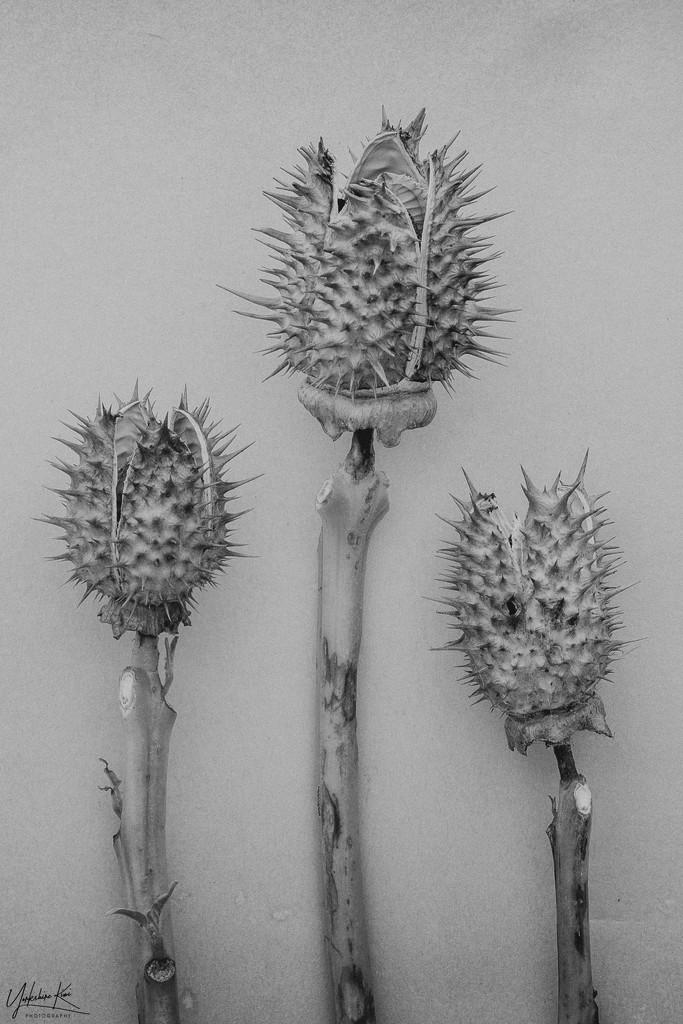 Those Weeds again by yorkshirekiwi
