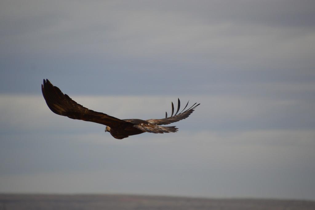 Hawk? by bigdad