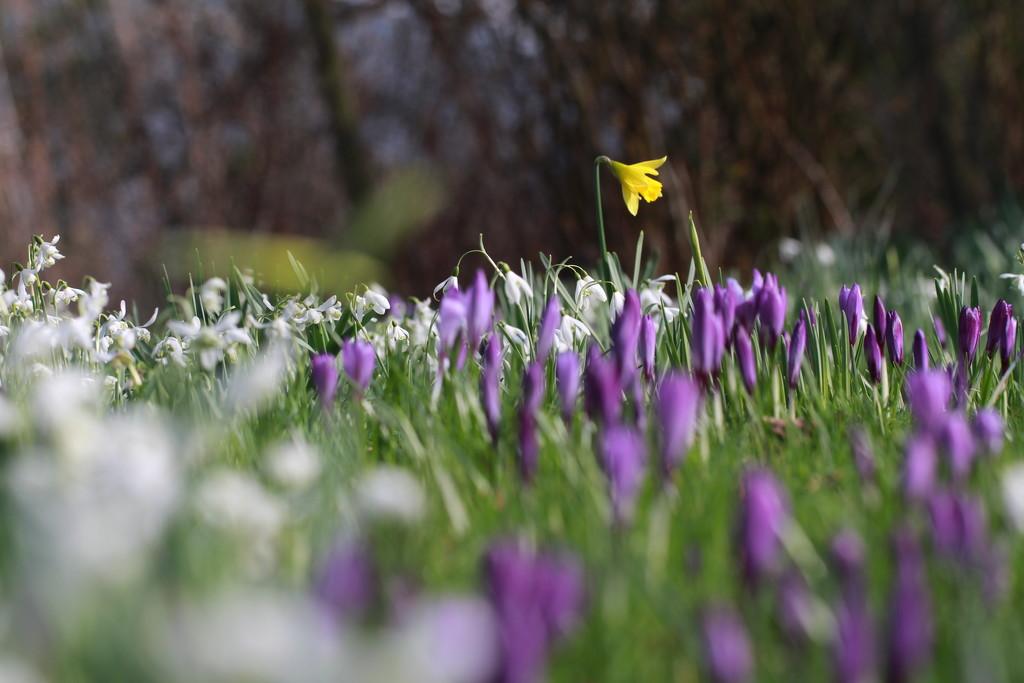 spring carpet by callymazoo
