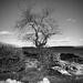 Winter Tree by joansmor