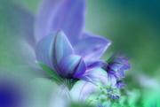 23rd Feb 2020 - Flowers in violet..........