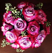 23rd Feb 2020 - Midnight Roses